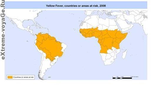 Желтая лихорадка, эпидемия 2008 года