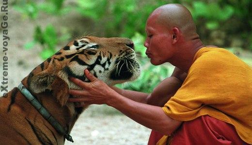 Защита от зверя - это понимание его инстинктов