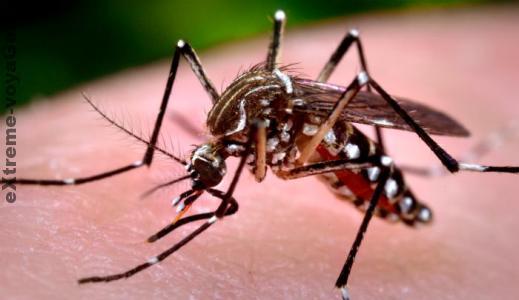 Как избавиться от комаров подручными способами