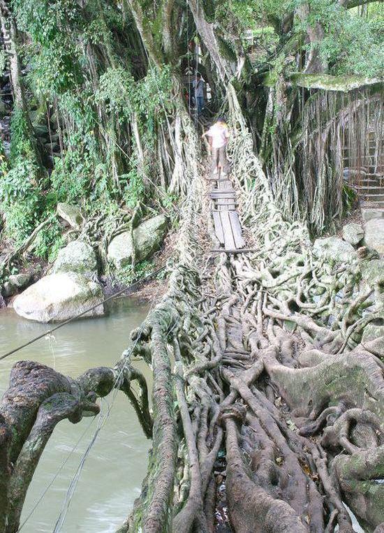 Экстремальный подвесной мост Jembatan Akar из корней баньяна