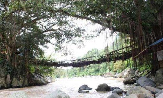 Мосту Jembatan Akar из переплетеных корней дерева более 120 лет
