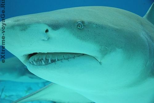 Вы сможете заглянуть в глаза акуле