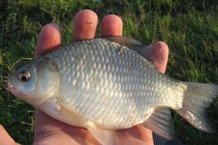 Рыбалка несколькими способами - крючок, гарпун, стрела и т.п.