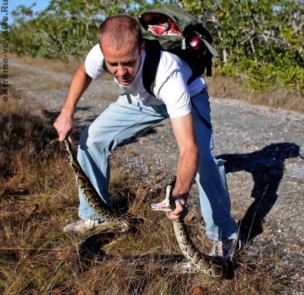 Охота на не ядовитую змею (питон)
