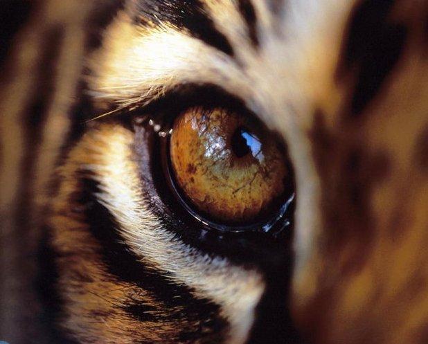 Смотреть National Geographic дикая природа: хищники Индии