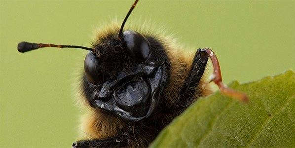 Самые опасные насекомые: видео National Geographic