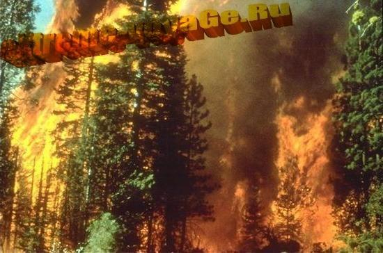 Лесной пожар днем