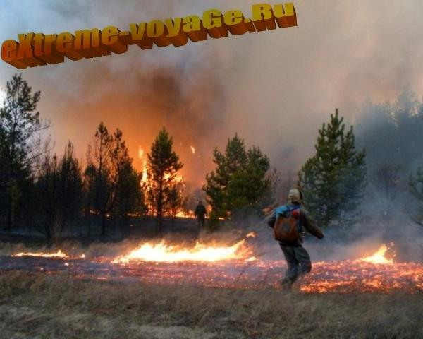 Лесной пожар вблизи