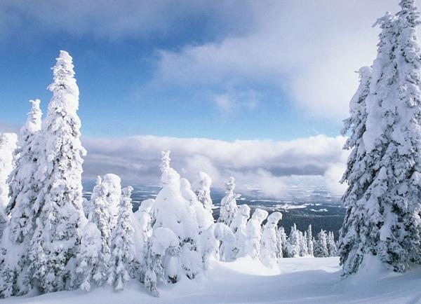 Сам себе барометр или зимние признаки изменения погоды