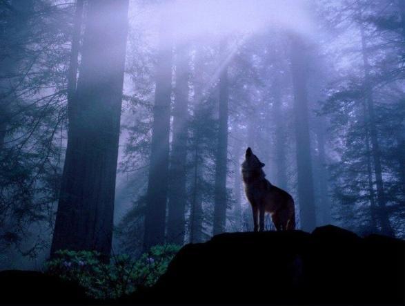 Главное правило выживания: в дикой природе вы - одинокий волк