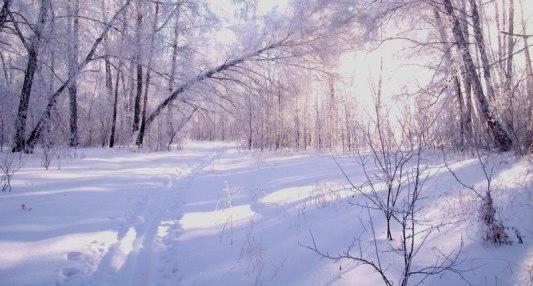 Как найти дорогу домой по чужой лыжне