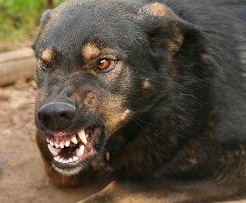Школа выживания: 5 правил защиты от собак
