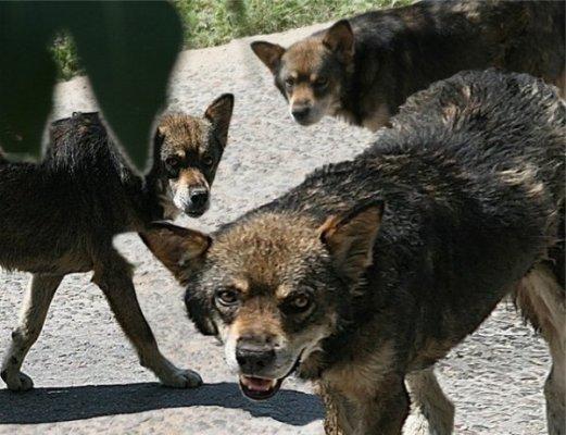 Нападение стаи собак - отдельная история