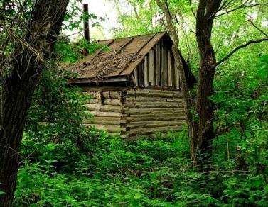 Бревенчатый домик в густом лесу - идеальное убежище отшельника