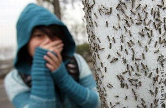 Нападение комаров