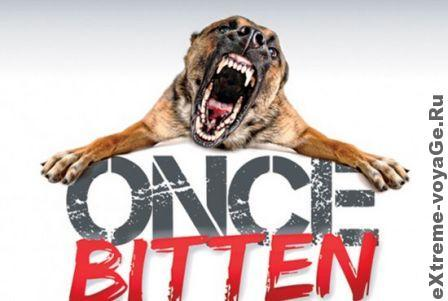 Профилактика и помощь при укусах животных