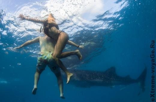 Нападение акул на людей: как избежать и выжить