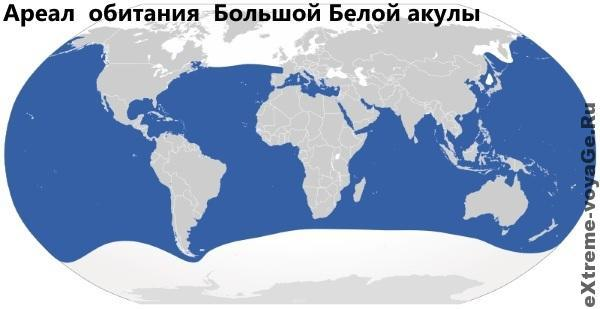 Ареал обитания Белой акулы