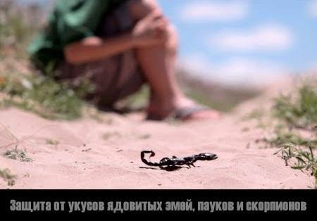Защита от укусов ядовитых змей, пауков и скорпионов