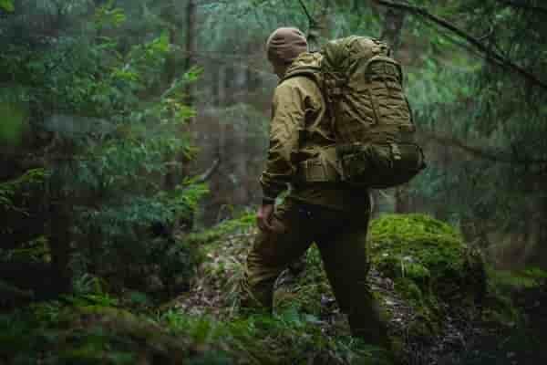 Выживание в лесу: 6 полезных деревьев