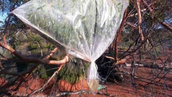 Как добыть воду в лесу от веток дерева