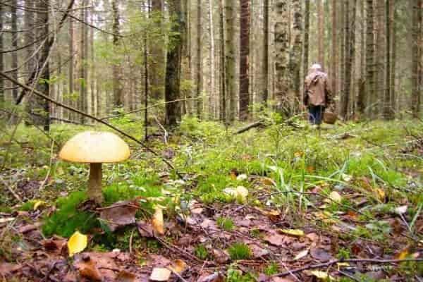 Советы по выживанию в лесу и поиску дороги домой