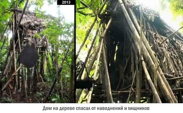 Ho-Van-Lang: дом на дереве