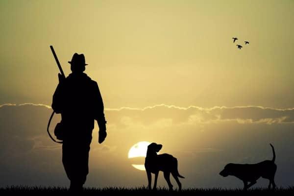 Как выбрать ружье для охоты и выживания