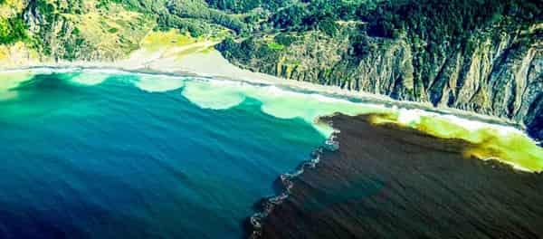 Угроза: активное цветение ядовитых водорослей в океане