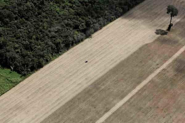 Угроза: сельва в бассейне Амазонки на грани уничтожения