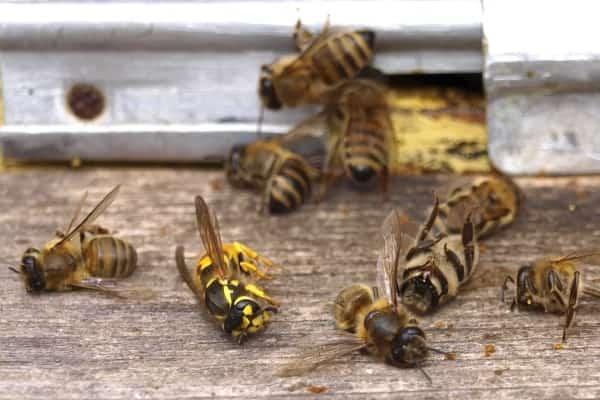 Угроза жизни на планете: энтомологический Апокалипсис